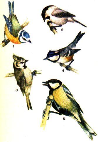 Re: народ подскажите что это за птица.