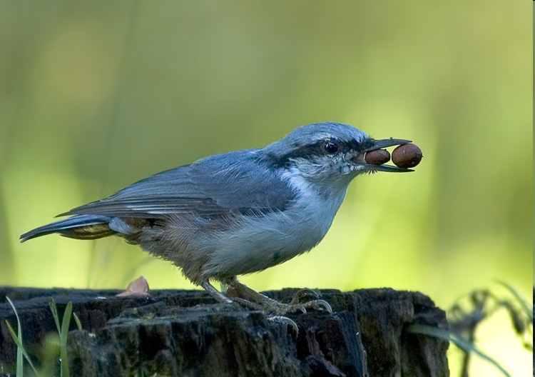 В эту осень в Союз охраны птиц России из разных концов Москвы.